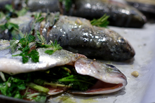 trout prepared with herbs