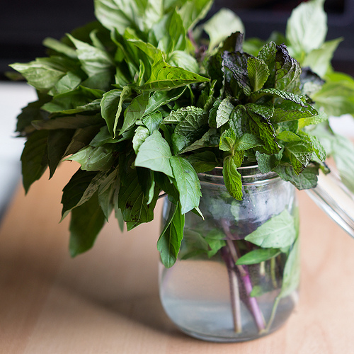 jar of herbs with water